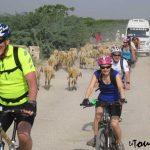 Jaipur-full-day-cycling-tour