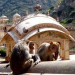 Monkey-Temple-in-Jaipur