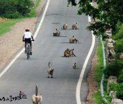 best-bike-trips