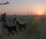touring-adventure-bikes