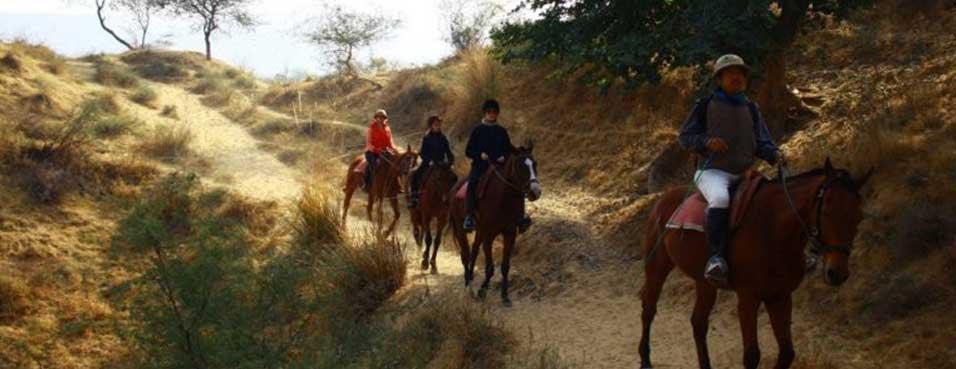 Horse Safari in Rajasthan India