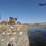 Day-tour-of-Jaipur